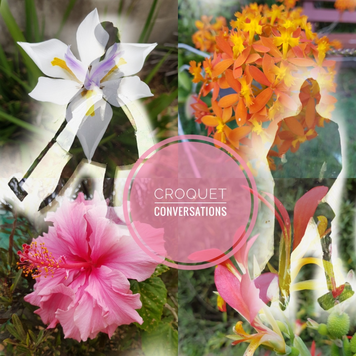 Croquet conversations